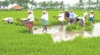Andhra Procures Record Quantities Of Agri-Produce