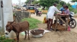 Donkey meat consumption in AP rising as 'aphrodisiac, healer'