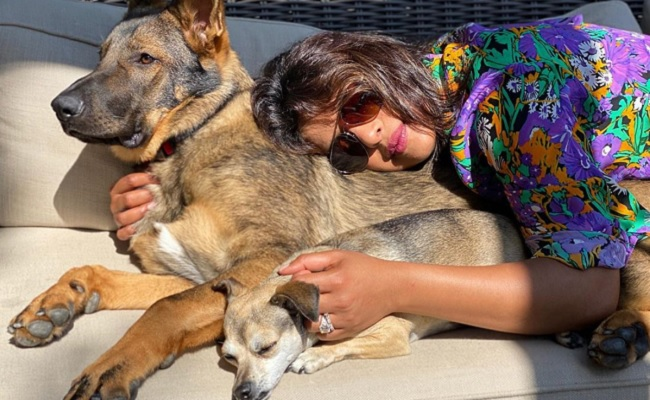 Priyanka's new pic packed with sunshine, cuddles