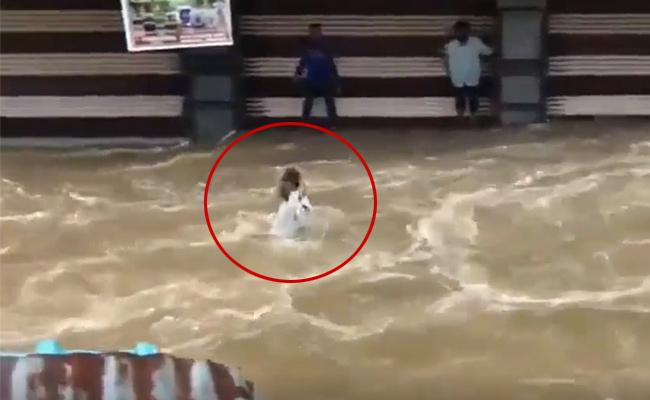 Video: Man Washed Away In Hyderabad As Locals Shout For Help