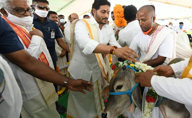 Jagan's cow worship also turns a political issue!