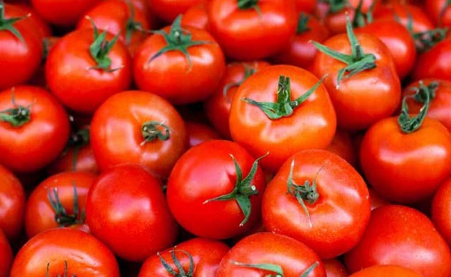 AP govt to buy tomatoes as farmers suffer low prices