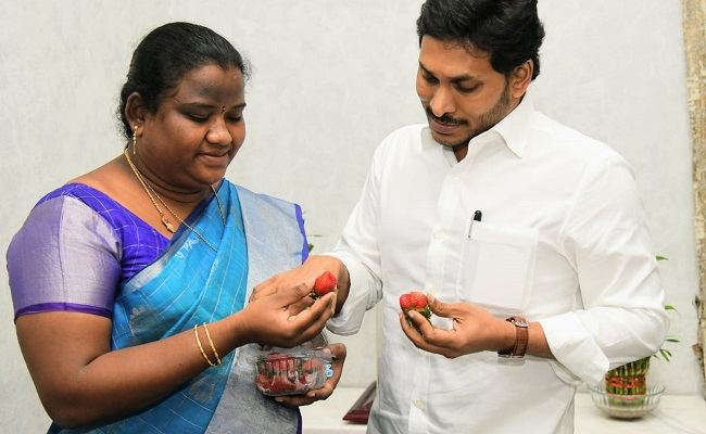 Araku MP Presents Strawberries To Jagan