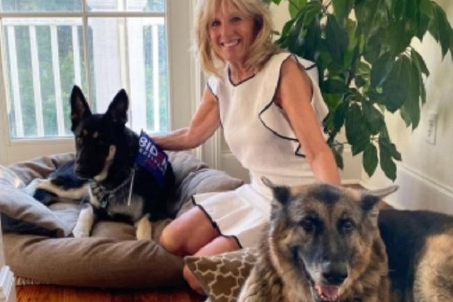 Biden's dog hurts 'someone at White House'