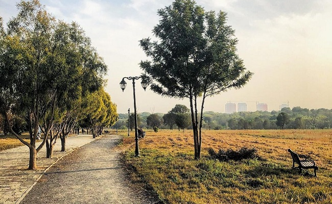 Hyderabad recognised as Tree City of the World