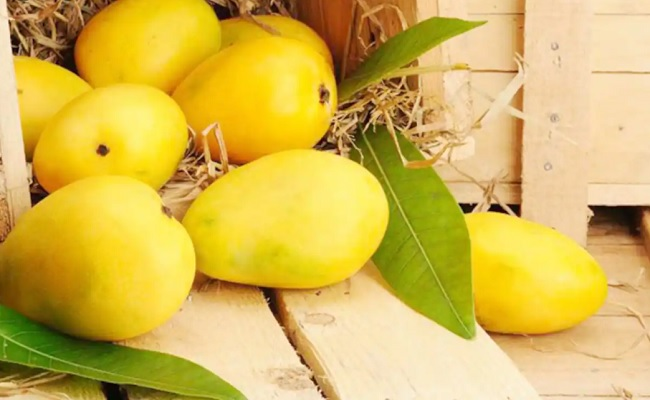 Health Benefits: Four Reasons To Eat Mangoes